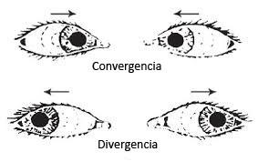 esquema-convergencia-divergencia-de-los-ojos